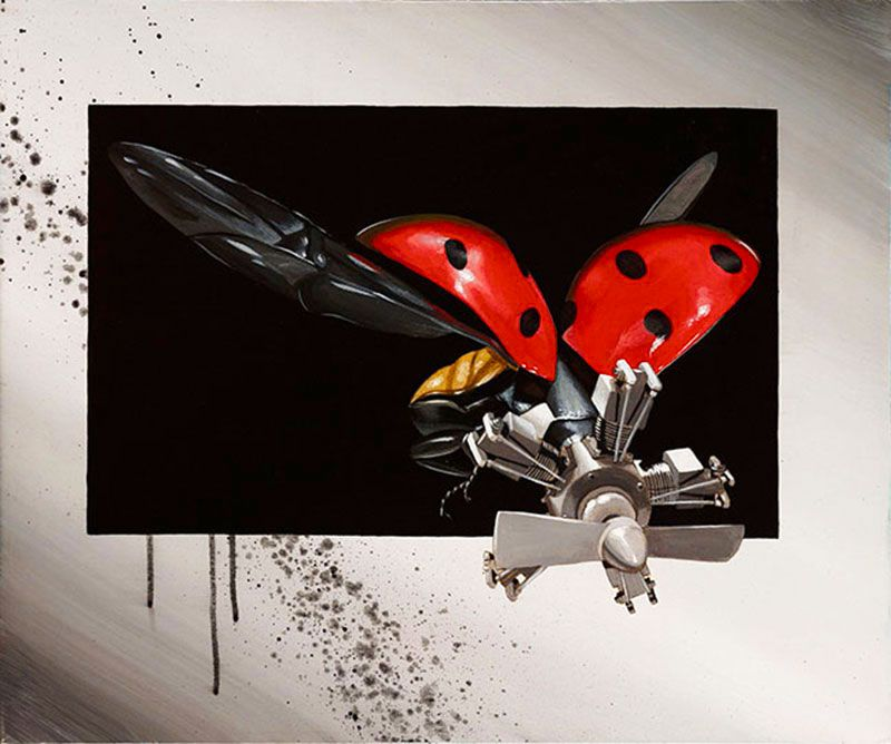 Coccinellidae-