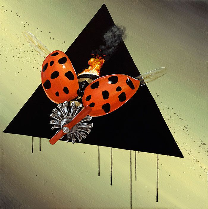 Coccinellidae-2