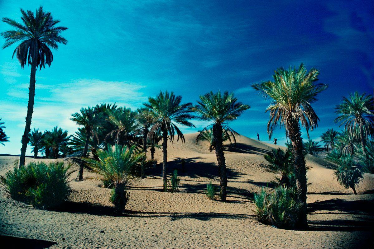 008-palmeras-y-dunas